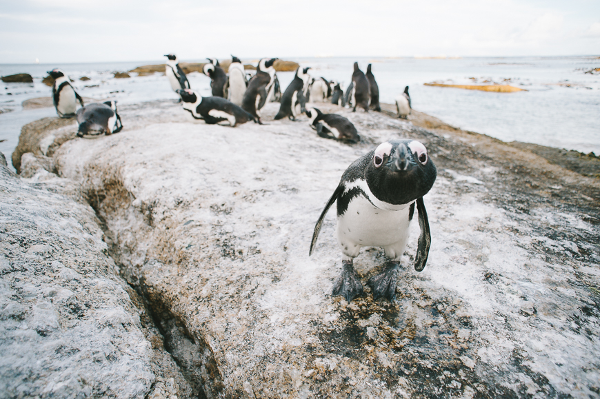 Cape-Town-for-National-Geographic-35